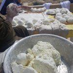 עונת עשיית גבינת הלאבנה
